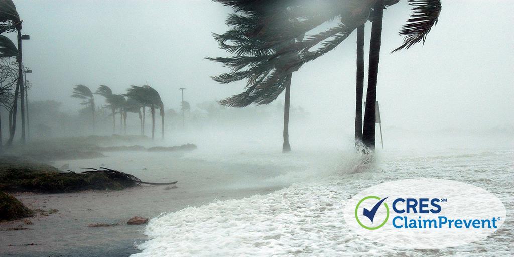 ocean and palm trees hurricane