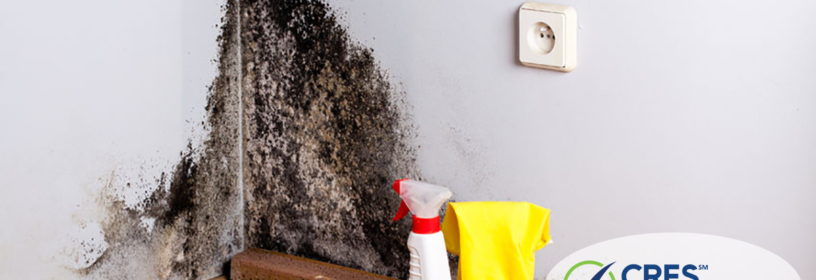 image of house with mold in real estate