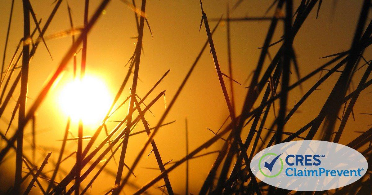 bright sun shining through the grass